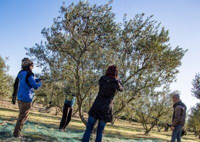 olives à Pézenas