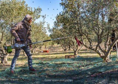 perche vibreur olives