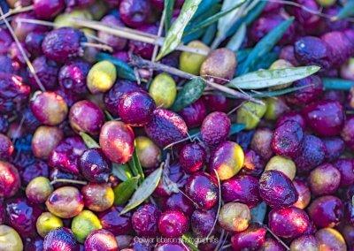 Olives panier