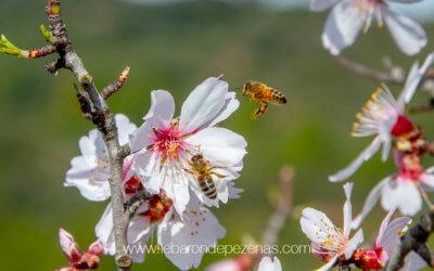 Bzzz abeille es-tu là ?