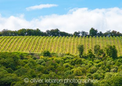 photo vignes faugeres