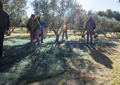olivier à Pézenas