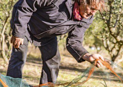 filets olives