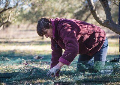 cueillir des olives à la main