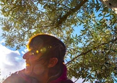 ramassage des olives sous le soleil