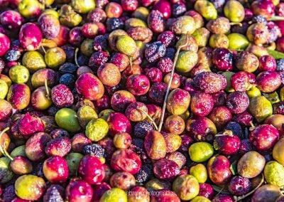 gros plan sur les olives