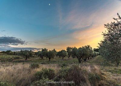 nuit sur champ d'oliviers