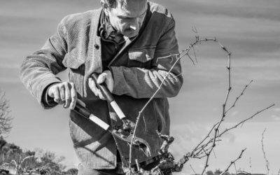 Taille tard, taille de mars, travail de la vigne