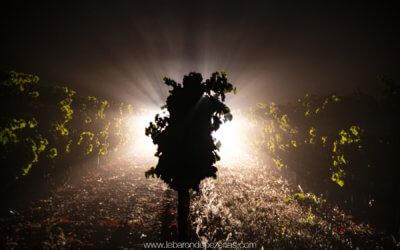 Vendanges nocturnes en Languedoc