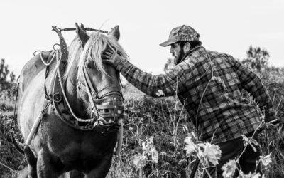 Cosinus Comtois, un cheval de trait sur le terroir pézenas de la font des ormes